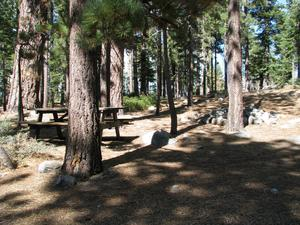 Camp Site  at Camp Shelly with picnic table in pine trees