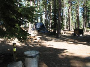 Camp Site 4 at Camp Shelly with bear box, pine trees and post marked 4