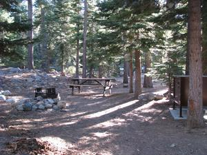Camp Site 5 at Camp Shelly with bear box, pine trees picnic table and fire pit