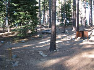 Camp Site 6 at Camp Shelly with bear box and pine trees