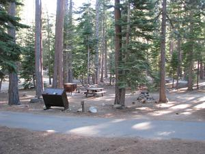 Camp Site 7 at Camp Shelly with bear box, pine trees, and picnic table
