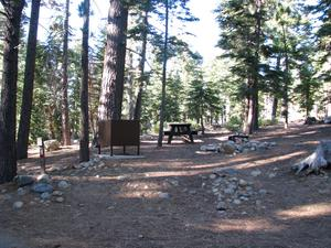 Camp Site 8 at Camp Shelly with bear box, pine trees, and picnic table