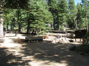 Camp Site 9 at Camp Shelly with bear box, pine trees, and picnic table