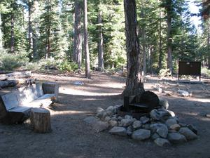 Camp Site 10 at Camp Shelly with bear box, pine trees and cut tree benches