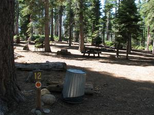 Camp Site 12 at Camp Shelly with bear box, pine trees and picnic table