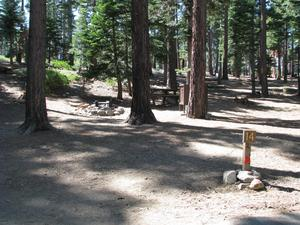 Camp Site 14 at Camp Shelly with bear box, pine trees and post marked 14