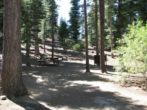 Camp Site 15 at Camp Shelly with bear box, pine trees and picnic table