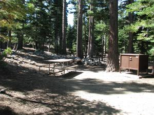 Camp Site 16 at Camp Shelly with bear box, pine trees and picnic table