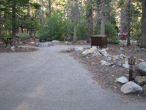 Camp Site 17 at Camp Shelly with bear box, pine trees and picnic table