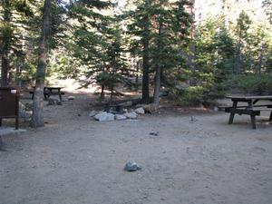 Camp Site 21 at Camp Shelly with pine trees, picnic table and bear box