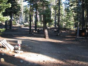 Camp Site 22 at Camp Shelly with pine trees and post marked 22