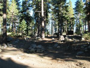 Camp Site 23 at Camp Shelly with pine trees and cleared dirt area
