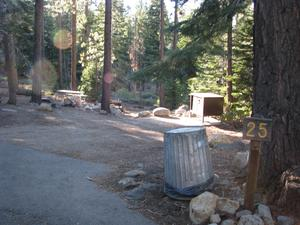 Camp Site 25 at Camp Shelly with pine trees, bear box and post marked 25