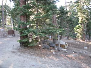Camp Site 26 at Camp Shelly with pine trees and bear box